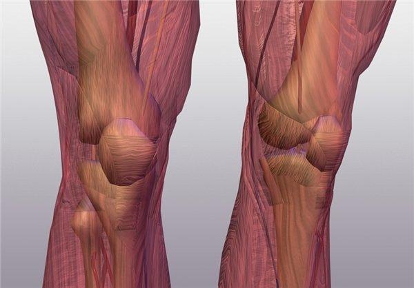 توسعه توان عضلانی یکی از اساسی ترین سازگاری های فیزیولوژیکی
