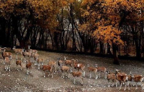 افتتاح باغ راز هستی و کاشت 120 هزار درخت