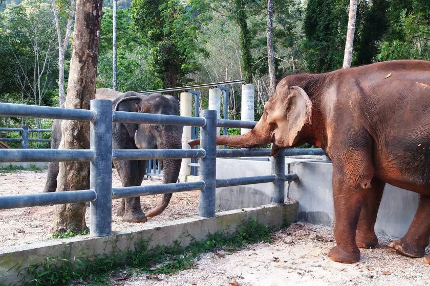 خانه سالمندان فیل ها در پوکت؛ مکانی آگاهی بخش برای گردشگران