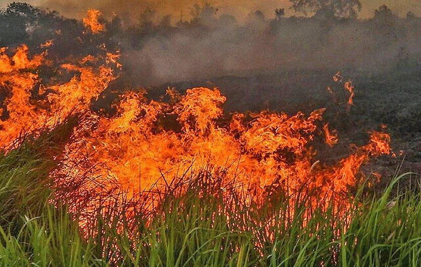 تداوم آتش سوزی های جنگلی از آمازون تا اندونزی