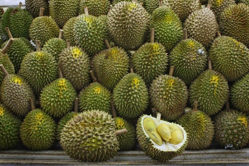 دوریان، میوه عجیب استوایی (جاذبه های مالزی: قسمت اول)