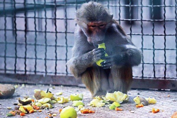 باغ وحش مشهد برای اصلاحات تا خاتمه آذر ماه مهلت دارد