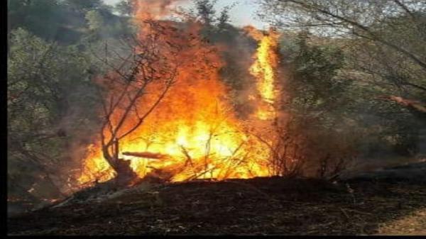 ساخت ویلا: آتش سوزی در مزارع و باغات روستای سزنق