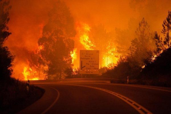 تور ارزان برزیل: خطر تلف شدن میلیون ها حیوان در آتش سوزی های برزیل